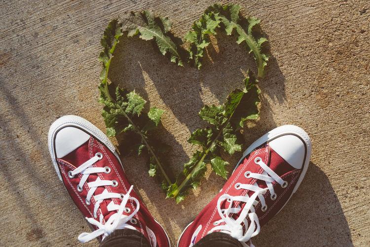 Close-up of shoe by heart shape leaf