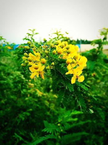 Flowers Morning Fresh Fragnance