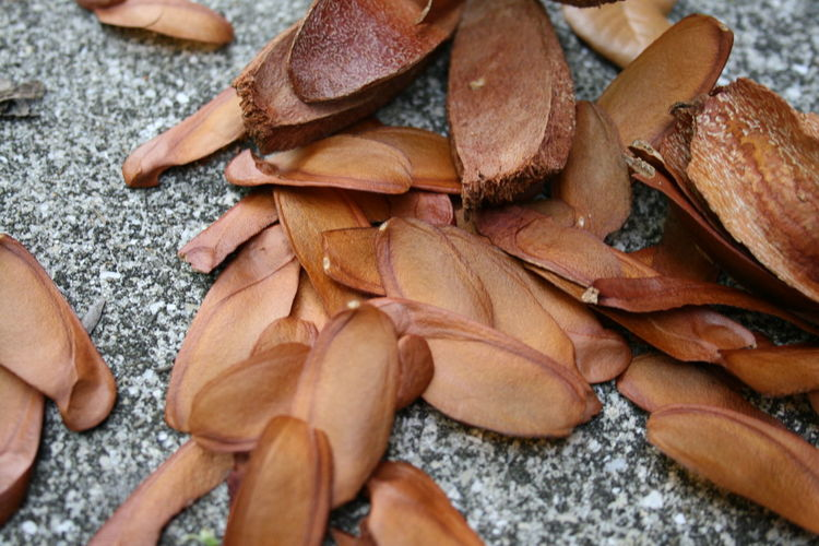 Seeds Florida Concrete Sidewalk Fall Us State Nature Man Made Leaves Fragile Brown Tree Dried Plant Seedlings EyeEm Selects Close-up Nutshell Dried Cement Fallen Change