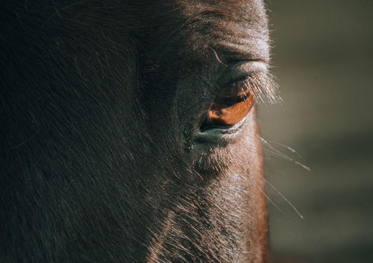 Close-up on a hours braun eye