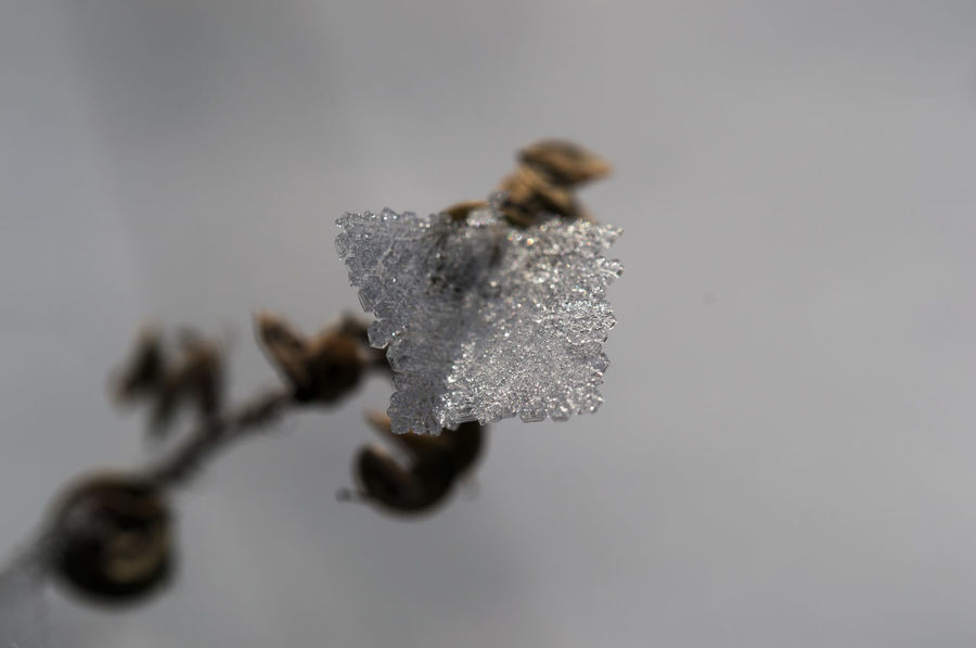 single ice cristal Close-up Day Fragility Freshness Ice Cristal Macro Photography Nature No People