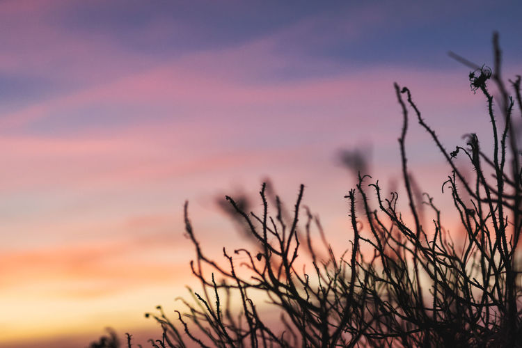 .. 54x365 .. . Sunset Sky Plant Cloud - Sky Beauty In Nature Tranquility Silhouette Scenics - Nature Bare Tree Nature Branch Tree No People Orange Color Tranquil Scene Outdoors Dramatic Sky Dusk Non-urban Scene Growth Romantic Sky Silence Absence