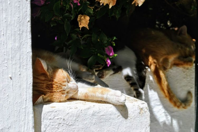 Close-up of cats sleeping on wall
