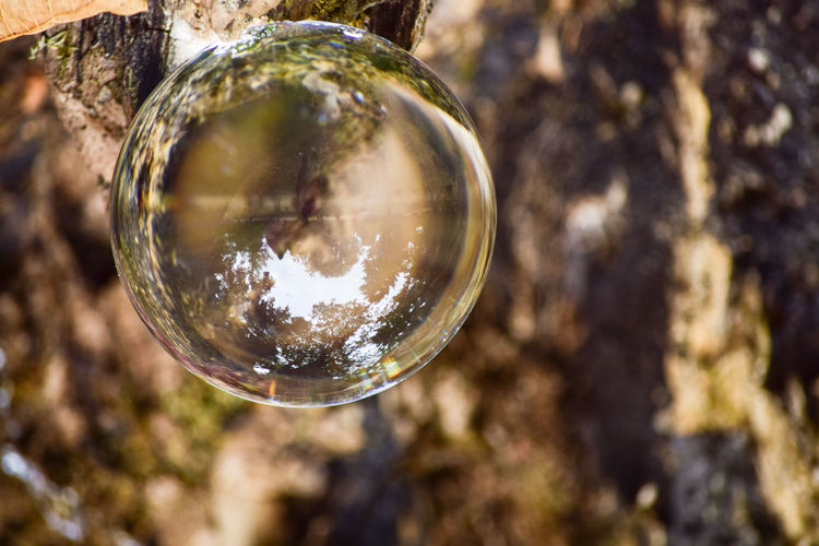 Close-up of bubbles in tree