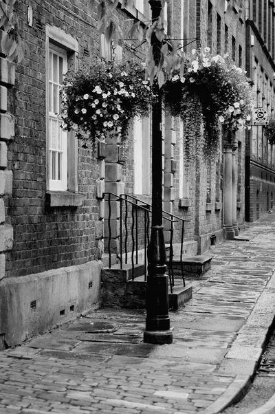 Black And White Street Photography The Street Photographer - 2015 EyeEm Awards Hanging Basket Lampost