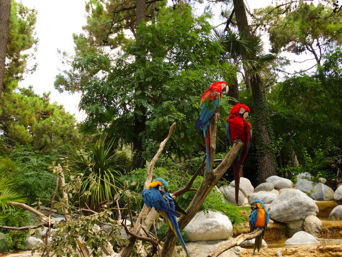 Bird Vertebrate Tree Plant Parrot Group Of Animals Perching Nature Day Macaw Two Animals Men Male Animal Animal Wildlife People Outdoors Animals In The Wild Branch Parakeet Parakeets Couple Of Birds colour of life Explosion Of Color