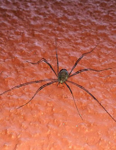 Spider Arachnid Bichos Nature Photography Wall