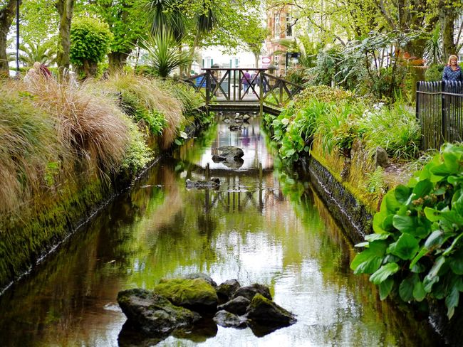 'Peaceful in the town centre'. Water Reflection Nature Day Tranquility Outdoors No People Tree Travel Destinations Footbridge Growth Beauty In Nature Architecture Animal Themes EyeEmNewHere Beauty In Nature Devon Paignton The Secret Spaces