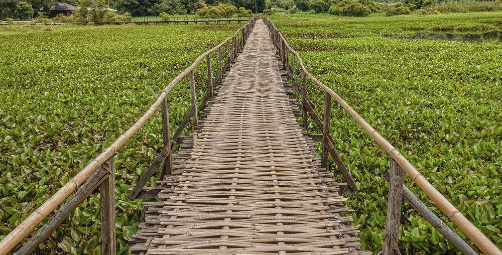 Narrow pathway along plants in field