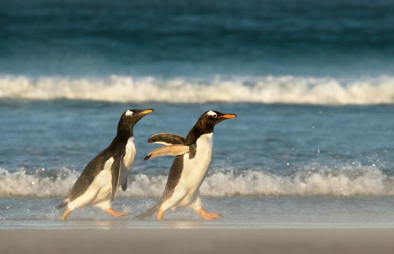 View of birds on beach