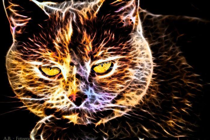 ...meine Mia mal anders... Photoshop Meine Katze The Illusionist - 2014 EyeEm Awards Kreativ