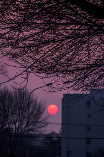 辚辚车喧,沸沸人哗,红日依旧,落向天涯。 sunset Tree Building Exterior Sky Sun Sunset Silhouette Dusk Building