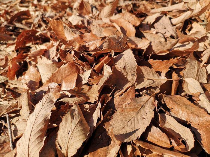 Full frame shot of dried autumn leaves on field