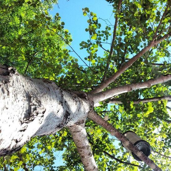 Ne yapsak, ne yapsak? Bir hamak alıp sallansak. Kurtulur muyuz bunalımdan, hamakta sallansak? Tree Agac Hamak Hammock gok sky mavi yesil blue green