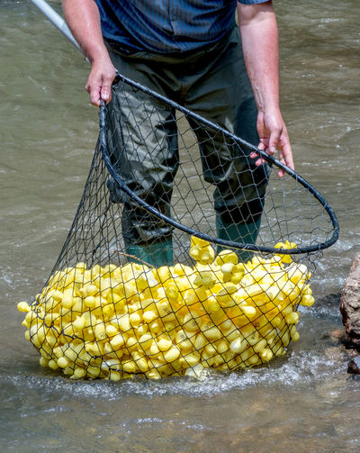 A man scoops up a pile of yellow rubber ducks, during a rubber duck race