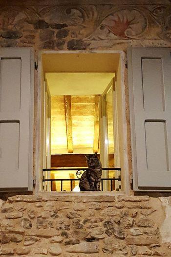 Cat Window Italian Night