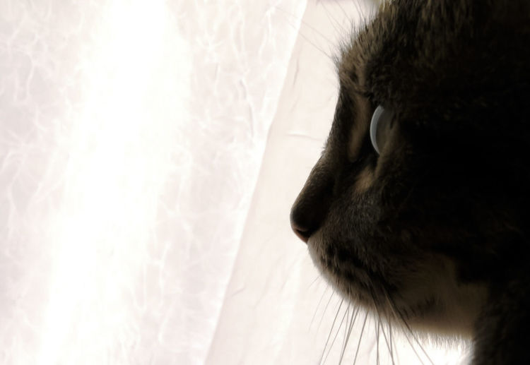 Cropped Image Of Cat Against Curtain