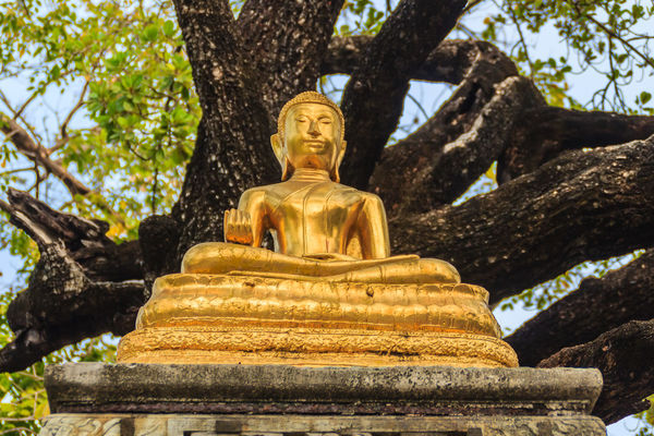 Beautiful golden Buddha image under the big tree in the forest. Wat Suthat Wat Suthat Thepwararam Art And Craft Belief Day Gold Colored Human Representation Idol Low Angle View Male Likeness No People Outdoors Place Of Worship Plant Religion Representation Sculpture Spirituality Statue Tree