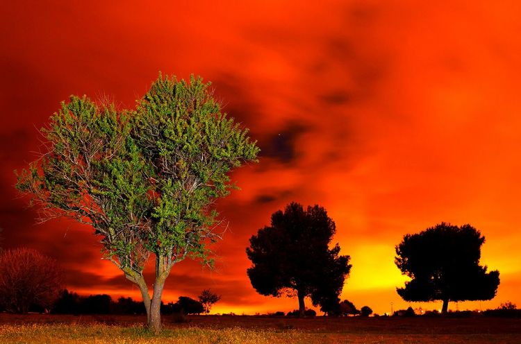 Heart tree un passion HUAWEI Photo Award: After Dark Tree Sunset Red Silhouette Rural Scene Backgrounds Shadow Tree Area Single Tree Sky