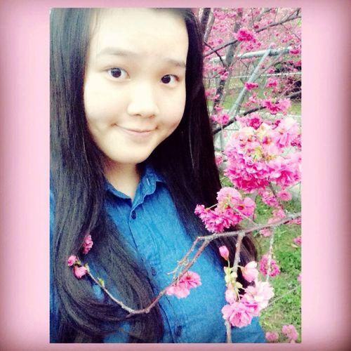 看看櫻花???✨
