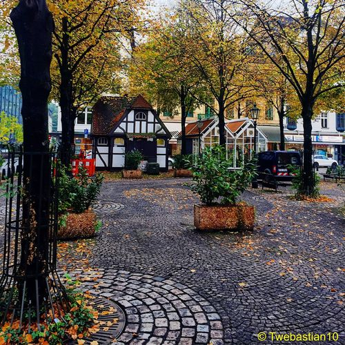 A Little Autumn Impression from Wuppertal 🍂🍁 // Autumn Colors Autumn Leaves Marketplace Trees Tree Leaf Leafs Leaf 🍂