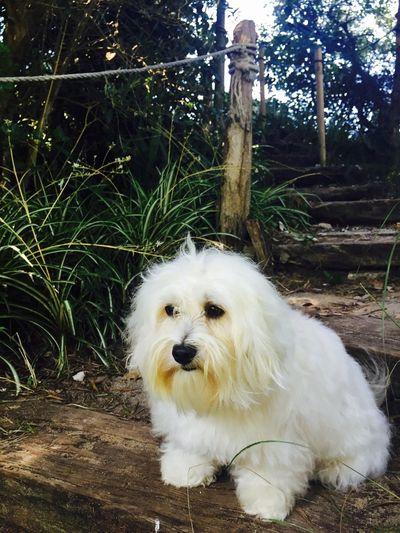 Ile D'Oleron Holidays ☀ Myprincess🐶🐶 Ilovemydog Isis😍