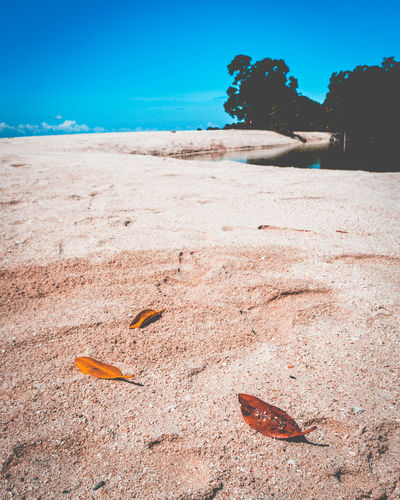 Nature is full of infinite causes that have never occurred in experience. -Leonardo Da Vinci EyeEmNewHere Beach Beachphotography Beauty In Nature Close-up Day Leaf Nature No People Outdoors Sand Sea Sky Tranquility Water EyeEmNewHere Modern Workplace Culture Go Higher The Still Life Photographer - 2018 EyeEm Awards
