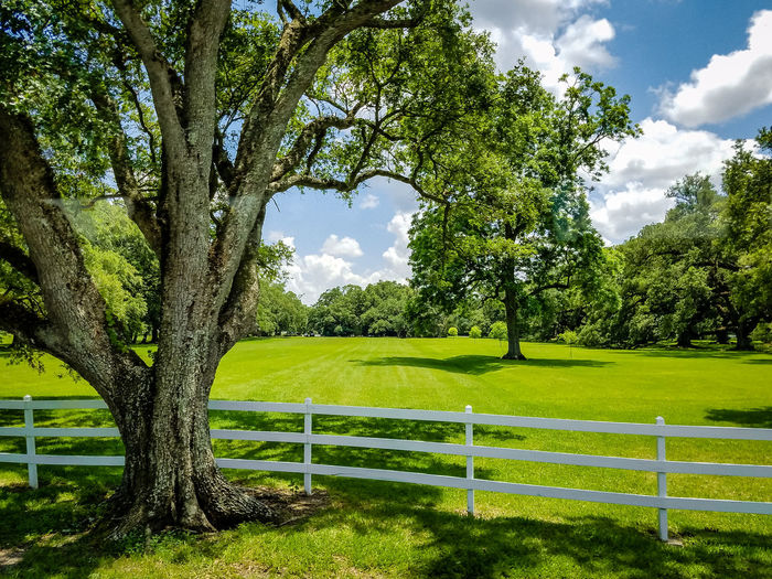 fresh air Beauty In Nature Day Grass Green Color Growth Landscape Lush - Description Nature No People Outdoors Plantation Sky Tree