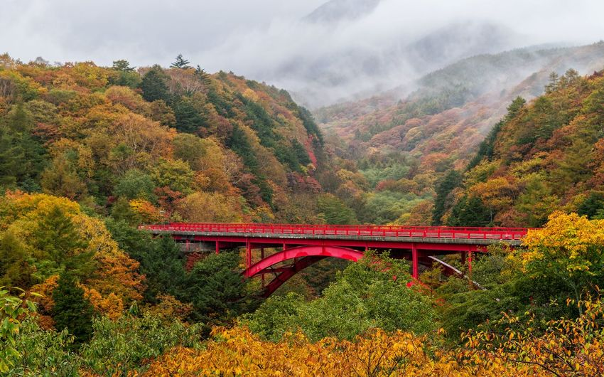View of bridge in forest during autumn