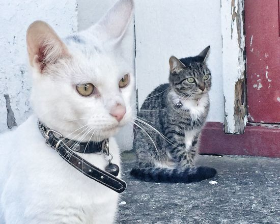 Siblings Cats Cats Of EyeEm Animal Photography Pets Pet Photography  Wall - Building Feature