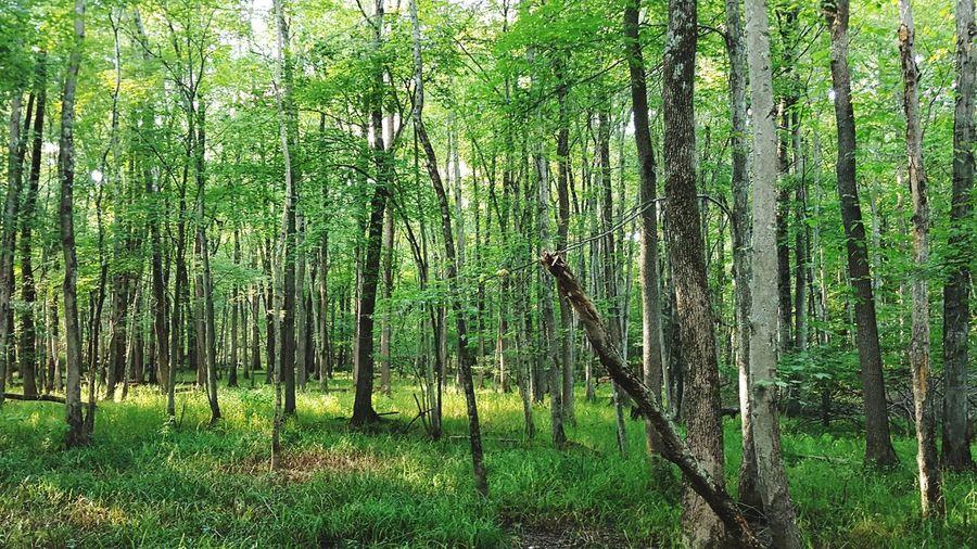 Walk Green Relaxing Earth