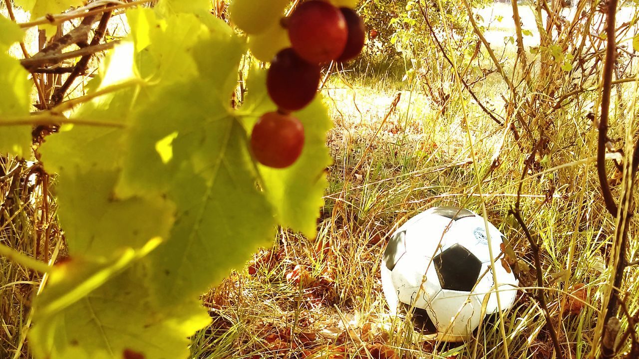 soccer, soccer ball, sport, ball, outdoors, day, no people, grass, close-up, soccer field, nature, tree