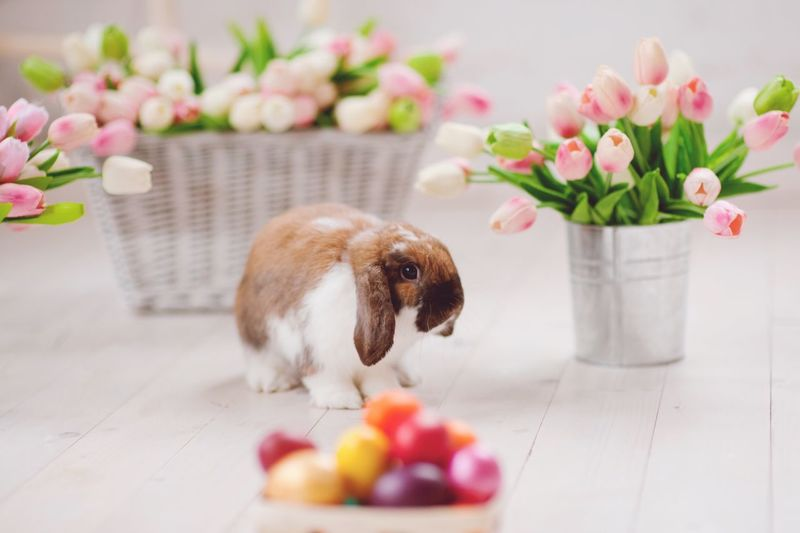 Easter Bunny  Easter Flower Pets One Animal Domestic Animals Mammal Animal Themes Indoors  Vase Petal Celebration Freshness No People Table Easter Hamster Flower Head Plant Food Nature Fragility
