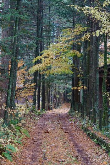 Autumn colors Karuizawa Plant Tree The Way Forward Land Forest Autumn Nature No People Outdoors Tranquility Scenics - Nature