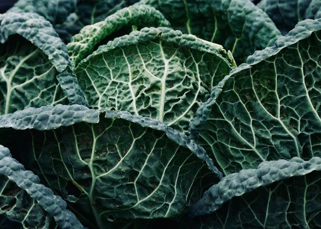 Green Kale Leaf Plant Part Green Color Full Frame Growth Close-up Vegetable Healthy Eating Backgrounds Beauty In Nature Cabbage Food And Drink Leaves Winter Leaf Vein Food Wellbeing Nature Organic Kale Pattern Texture Agriculture Green