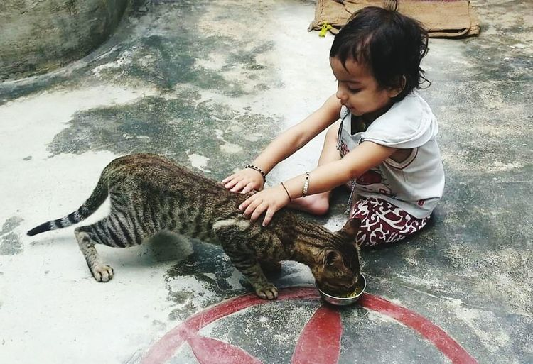 Mithi.. Cat And
