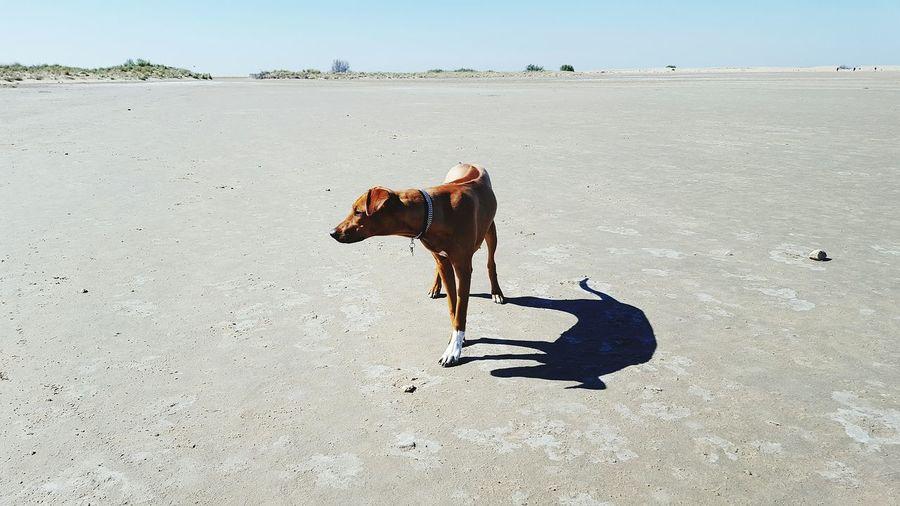 Dog at beach against sky
