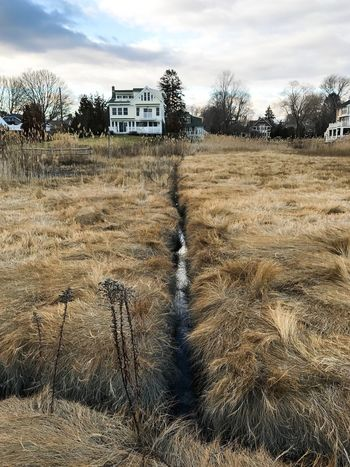 Winter on the coast of Connecticut, USA. Photo by Tom Bland. No People Grass Nature Built Structure Outdoors Coastal IPhoneography IPhone New England  Connecticut House Houses Marsh Grasses Winter Coastal Life Marshland  Salt Marsh Landscape Cold