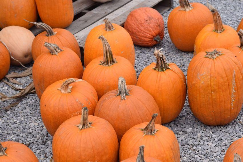 EyeEm Selects Fall pumpkin harvest. Pumpkin Halloween Autumn Orange Color Vegetable No People Jack O' Lantern Outdoors