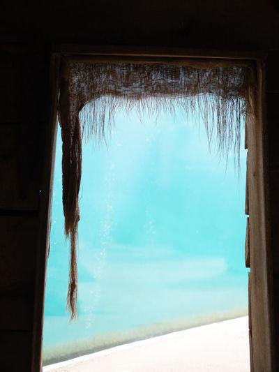 Window Nature