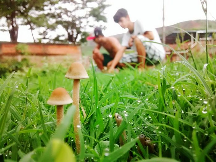 Mushroom Grass Nature Growth Outdoors People Day Adult Close-up