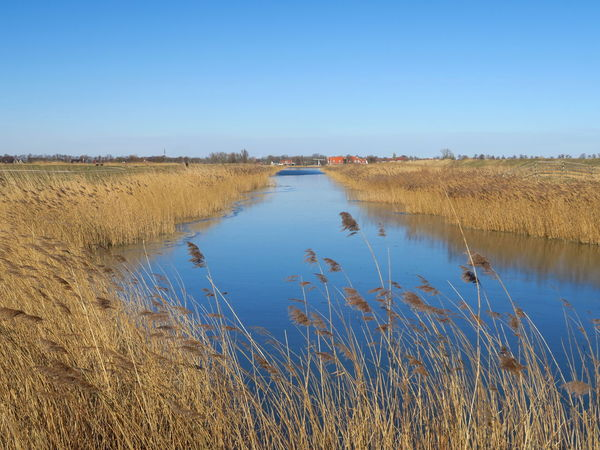 Volgermeerpolder - Crackling Clear Blue Sky, Shades of Blue Water Dutch Countyside EyeEm Best Shots EyeEm Nature Lover EyeEm Gallery EyeEmBestPics EyeEmNewHere Ice Beauty In Nature Clear Sky Day Ditch Dutch Ditch Dutch Landscape Eye4photography  Grass Growth Lake Lake View Lakeshore Landscape Nature No People Outdoors Scenics Sky Tranquil Scene Tranquility Water