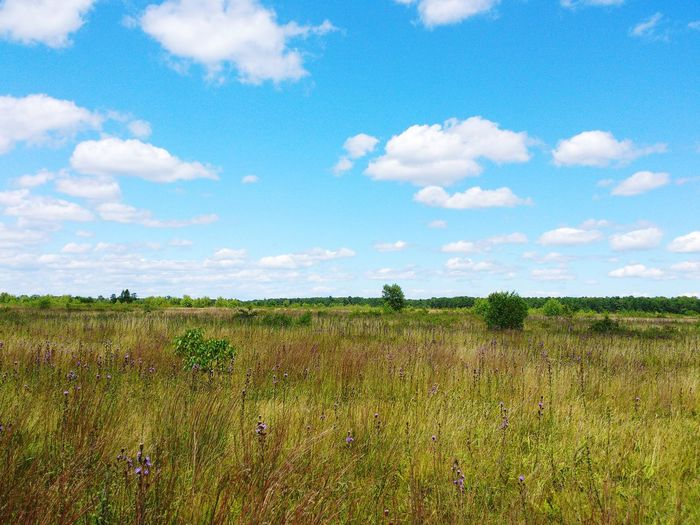Blueberry Plains Kennebunk Maine New England  Landscape Blue Sky Lost In The Landscape