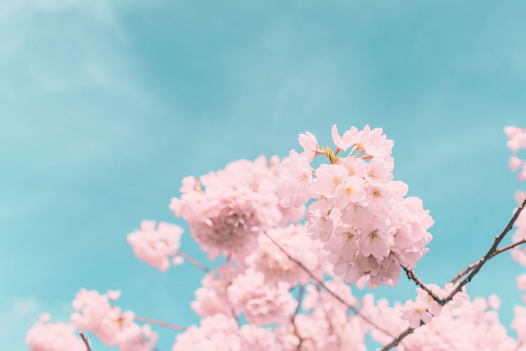 spring blossoms Beauty In Nature Close-up Day Flower Flower Head Fragility Freshness Growth Nature No People Outdoors Pink Color Sky Springtime