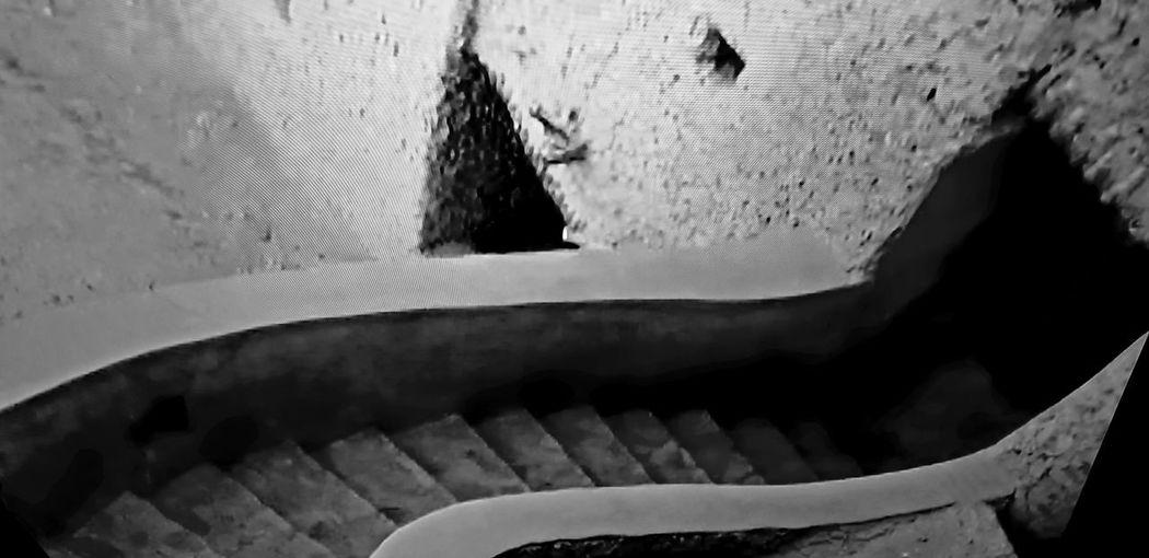 Black & white, Siwa Oasis, Egypt Close-up Perching