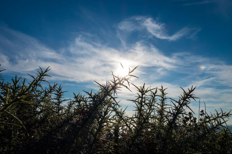 Beauty In Nature Coastal Nature Plant Silhouette Simplicity Summer Sun Sun And Clouds