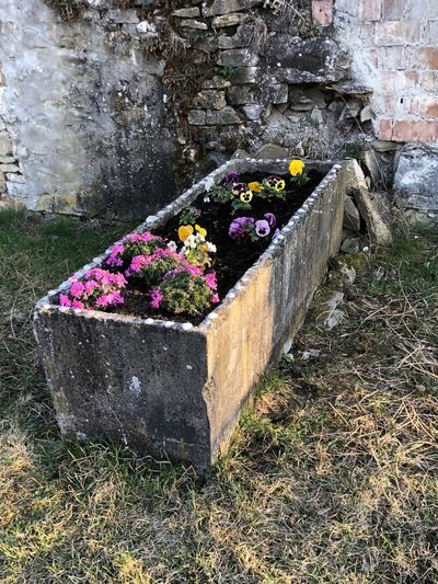 Potted plants on stone wall