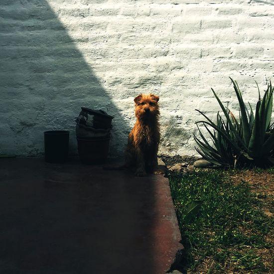 Scott Home Is Where The Art Is Dog Pet Lima Perú Newvsco EyeEm Pet Portraits