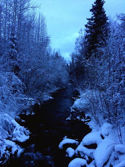 Alaska Aynaphotography Fairbanks Chena Hot Springs Resort Winter Chena River Enjoying The View Hot Springs Nature Trees