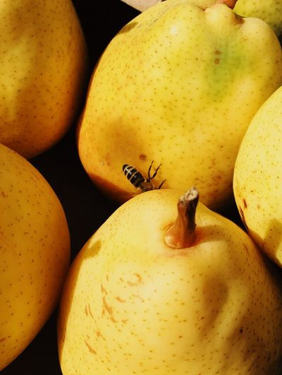 Autumn colors Autumn Fall Yellow Color Summertime Pear Autumn Autumn colors Insect Bee Healthy Eating Food And Drink Food Wellbeing Freshness Still Life Fruit Close-up Yellow Pear Organic Nature Apple - Fruit Healthy Lifestyle No People Vegetable High Angle View